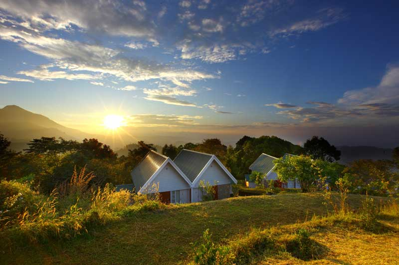 Ambady Estate :: Munnar